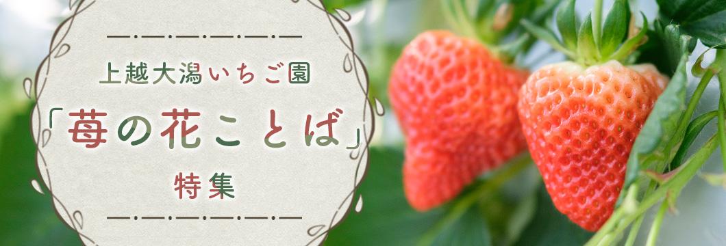 上越大潟いちご園 『苺の花ことば』 特集